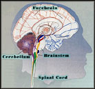Brain Schematic - Post Concussion Symptoms